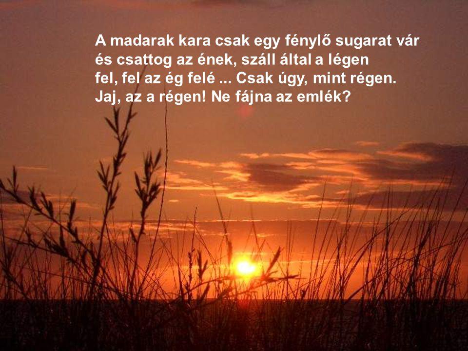 A madarak kara csak egy fénylő sugarat vár és csattog az ének, száll által a légen fel, fel az ég felé...