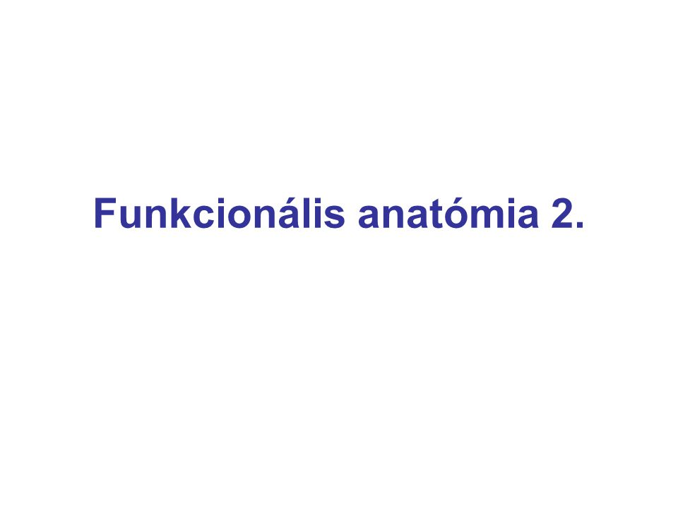 Funkcionális anatómia 2.