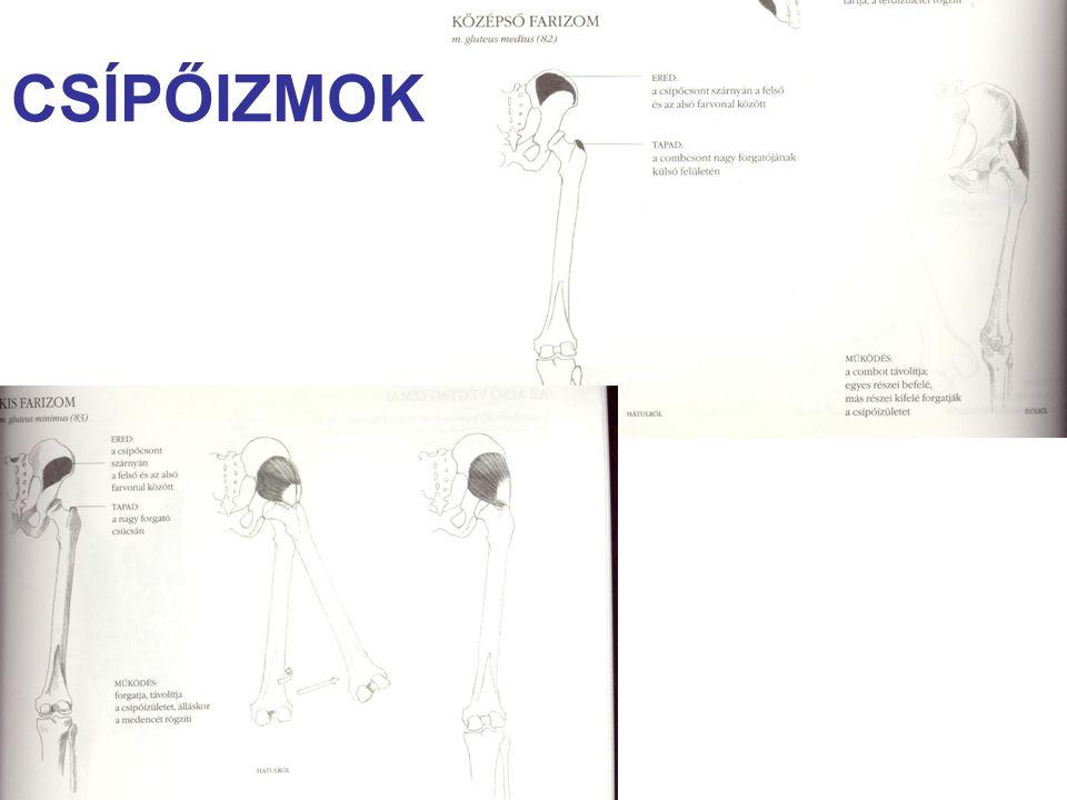 COMBIZMOK - feszítők 1.