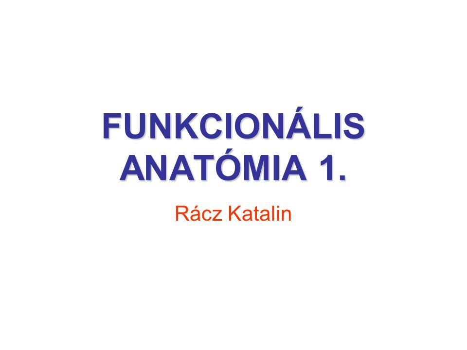 FUNKCIONÁLIS ANATÓMIA 1. Rácz Katalin