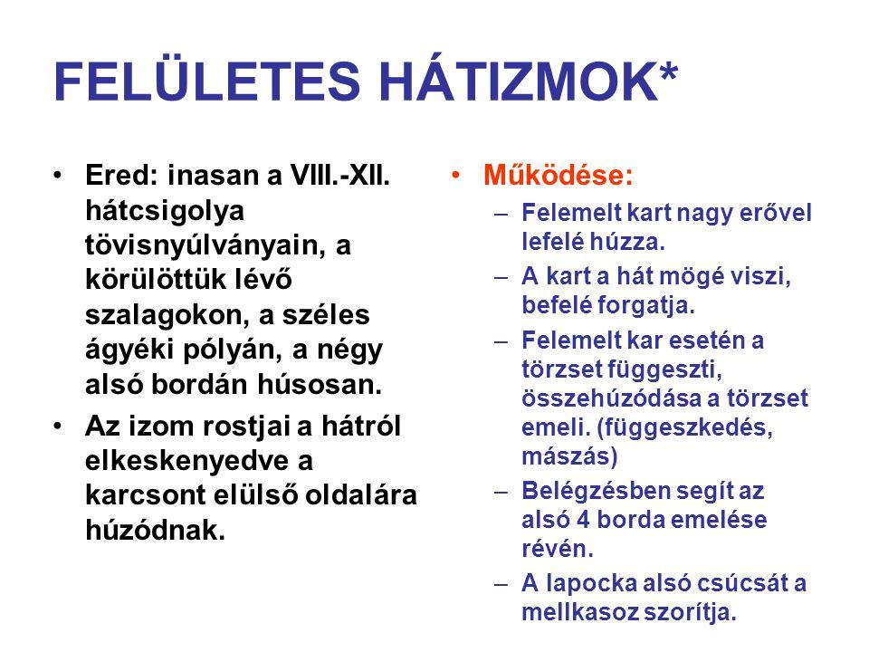 FELÜLETES HÁTIZMOK* Ered: inasan a VIII.-XII.