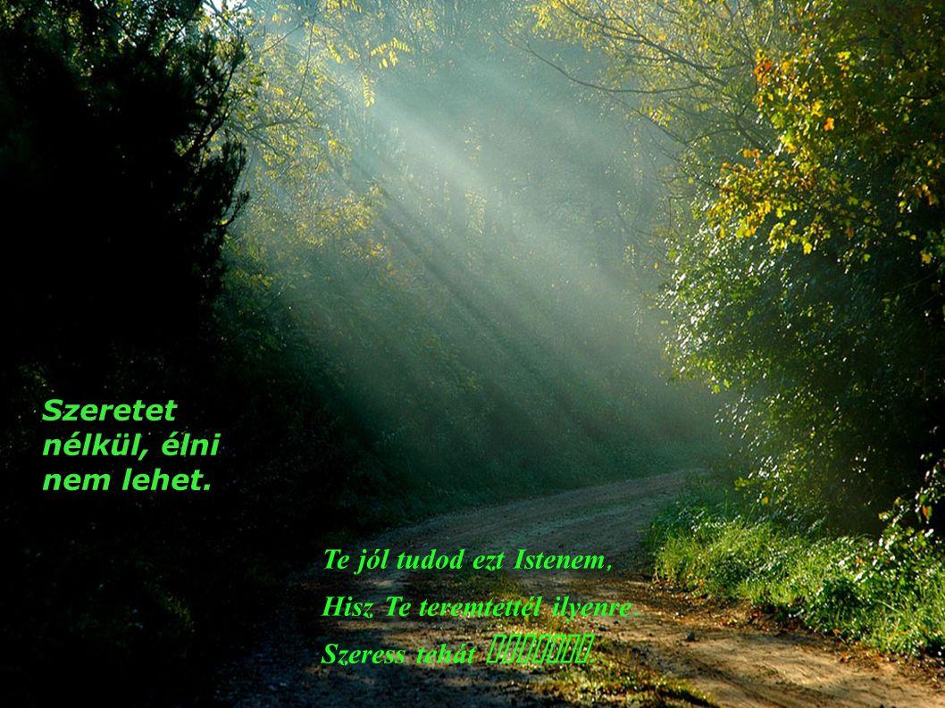 Szeretet nélkül, hinni sem lehet Mert ez a hit gyökere, É ltető napfénye, növesztő melege Szeress, hogy higyjek Istenem.