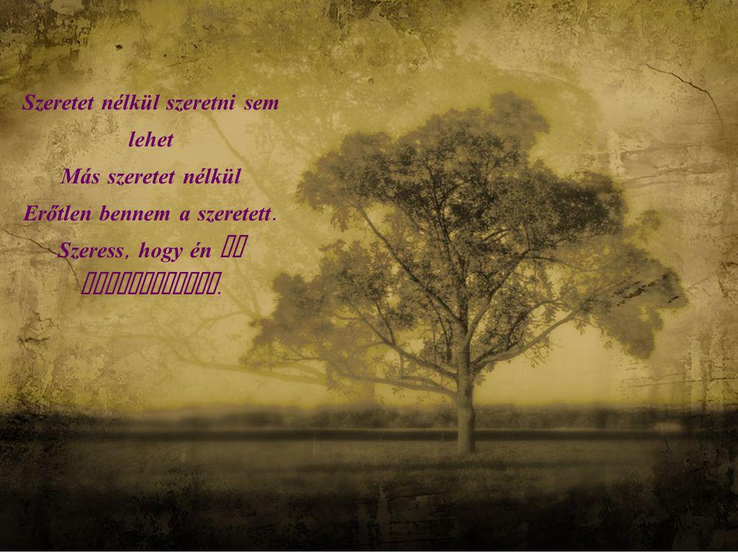 Szeretet nélkül szenvedni sem lehet Ez ad neki értelmet S édessé teszi a keresztet.