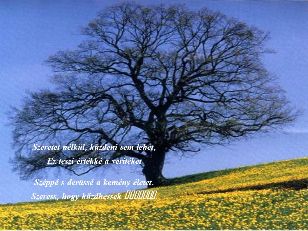 Szeretet nélkül, megbocsájtani sem lehet Legyőzni a gyülöletet, Kenyért dobni vissza a kő helyet.
