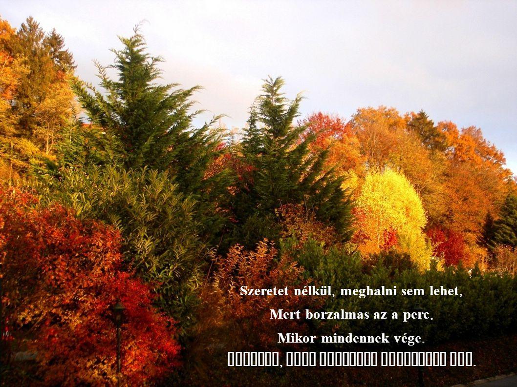 Szeretet nélkül semmi az ember Szerencsétlen, félresikerült remek.