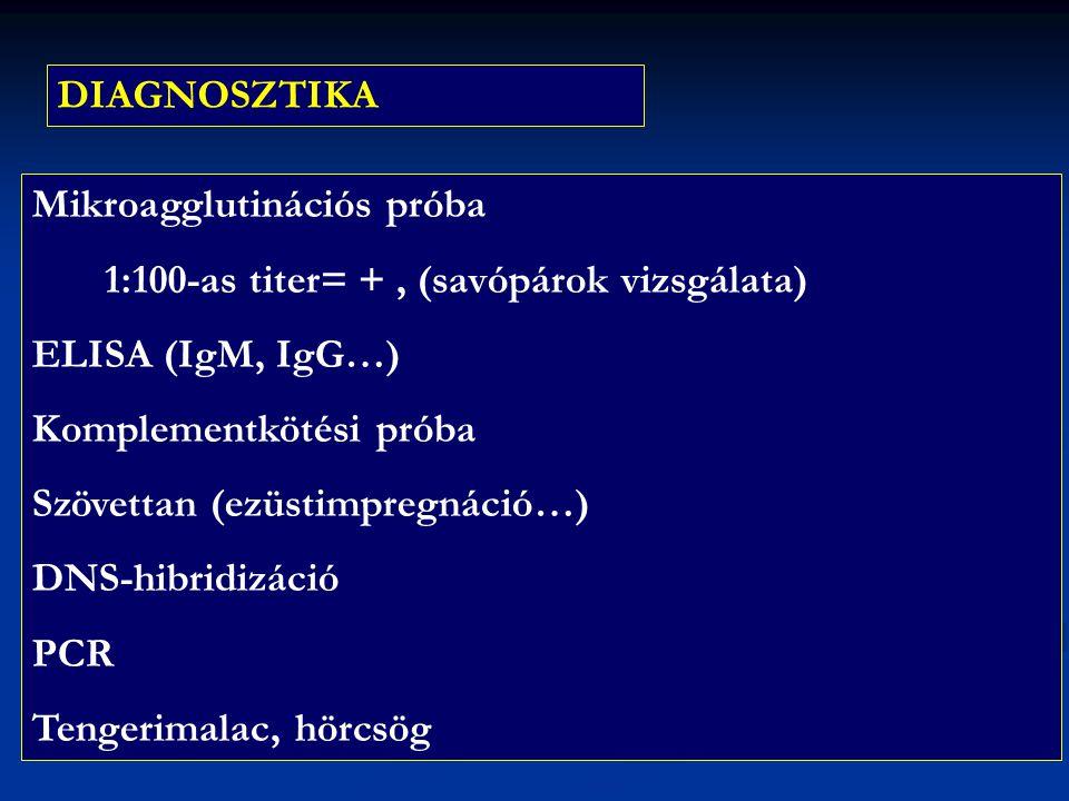 DIAGNOSZTIKA Mikroagglutinációs próba 1:100-as titer= +, (savópárok vizsgálata) ELISA (IgM, IgG…) Komplementkötési próba Szövettan (ezüstimpregnáció…)