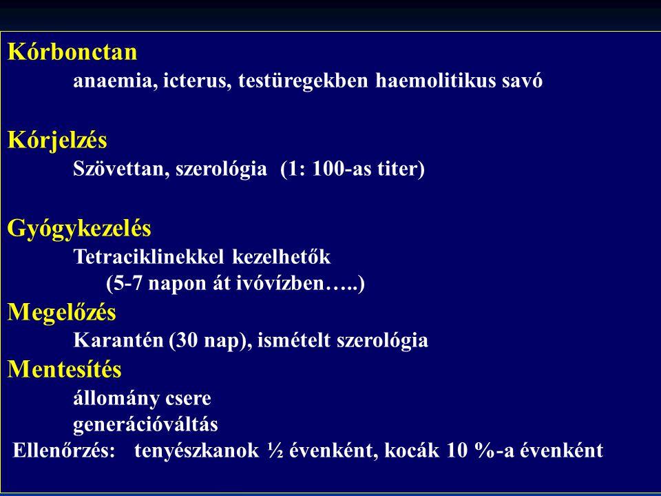 Kórbonctan anaemia, icterus, testüregekben haemolitikus savó Kórjelzés Szövettan, szerológia (1: 100-as titer) Gyógykezelés Tetraciklinekkel kezelhető