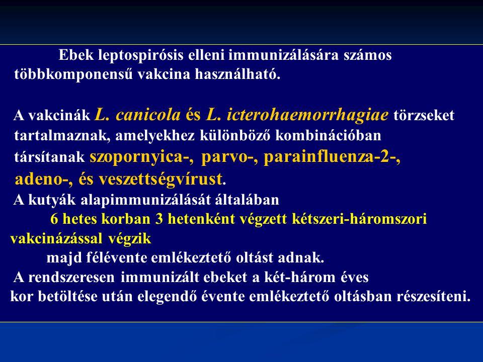 Ebek leptospirósis elleni immunizálására számos többkomponensű vakcina használható. A vakcinák L. canicola és L. icterohaemorrhagiae törzseket tartalm