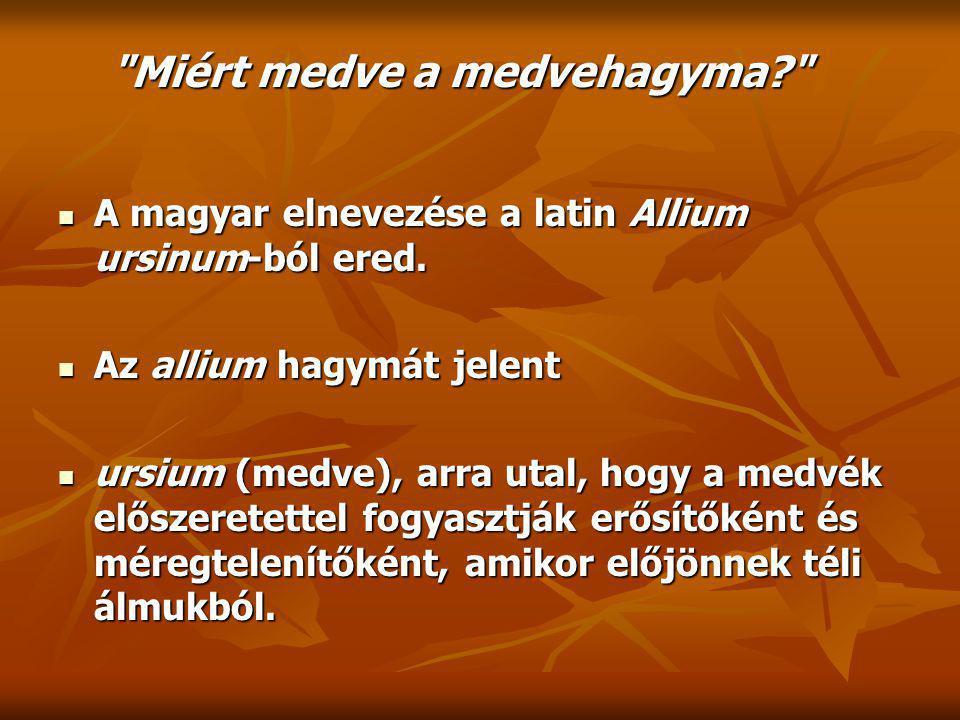 A magyar elnevezése a latin Allium ursinum-ból ered.