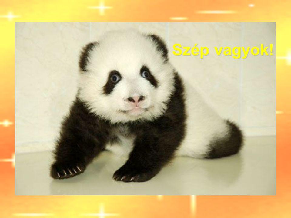 Panda Tai Chi