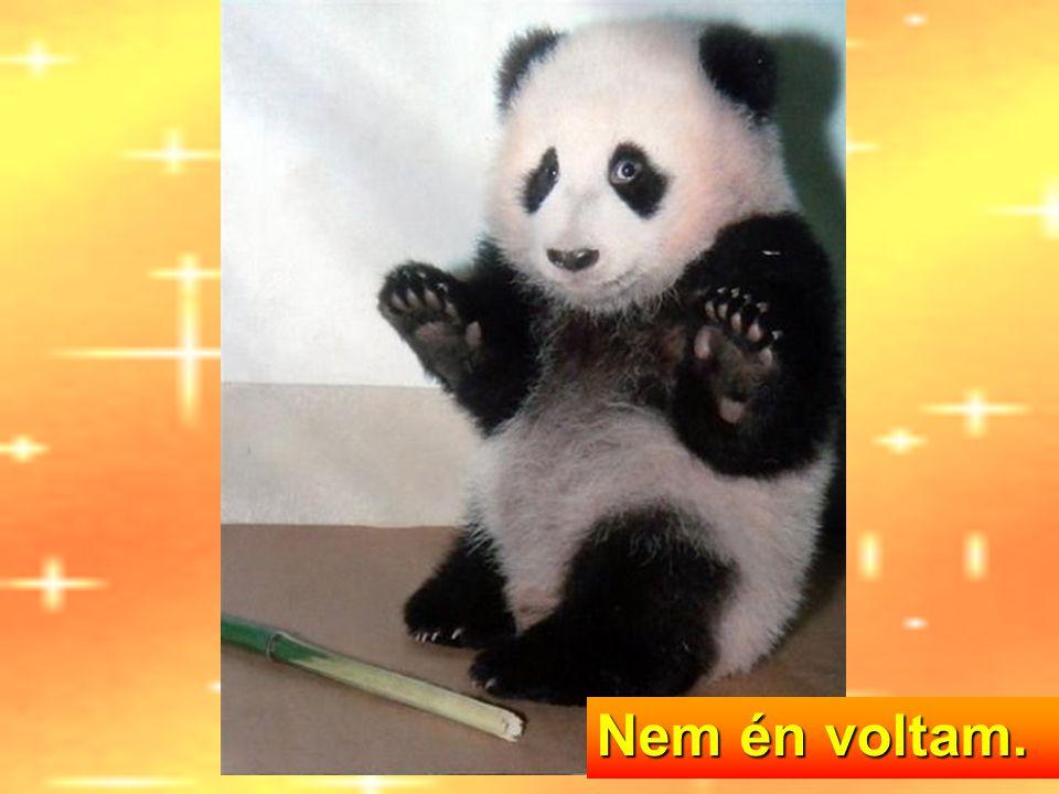 Kung Fu Panda...