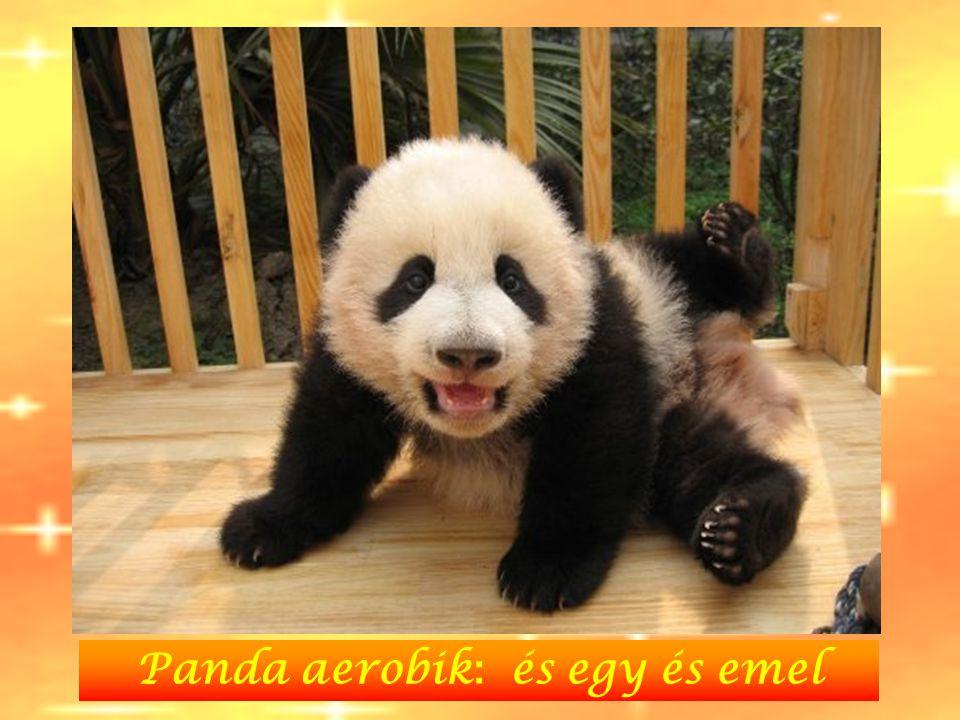 Panda aerobik : és egy és emel