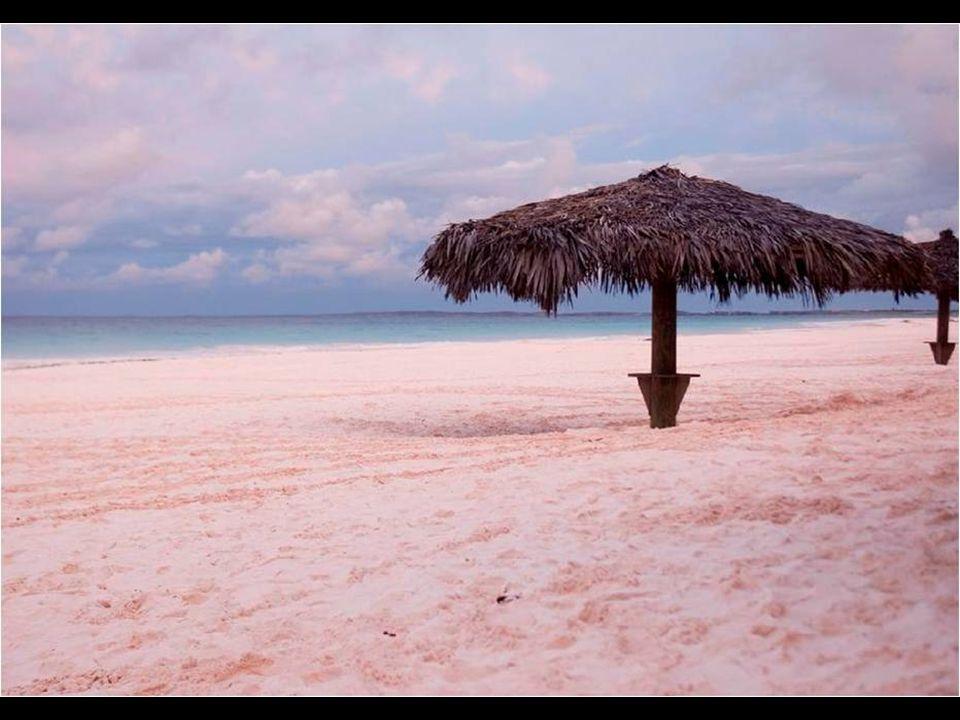 A Coral Pink Sand Beach A bahamai Harbor szigeten, a pálmákkal övezett strand homokja rózsaszín ű.