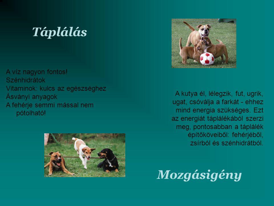 Táplálás Mozgásigény A kutya él, lélegzik, fut, ugrik, ugat, csóválja a farkát - ehhez mind energia szükséges. Ezt az energiát táplálékából szerzi meg