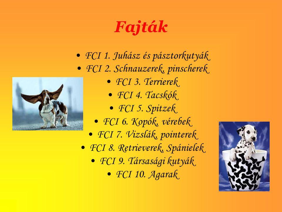 Fajták FCI 1. Juhász és pásztorkutyák FCI 2. Schnauzerek, pinscherek FCI 3. Terrierek FCI 4. Tacskók FCI 5. Spitzek FCI 6. Kopók, vérebek FCI 7. Vizsl