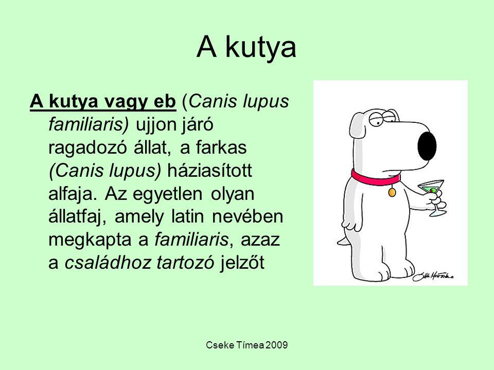 Cseke Tímea 2009 A kutya A kutya vagy eb (Canis lupus familiaris) ujjon járó ragadozó állat, a farkas (Canis lupus) háziasított alfaja. Az egyetlen ol