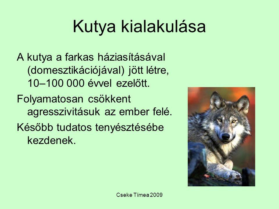 Cseke Tímea 2009 Kutya kialakulása A kutya a farkas háziasításával (domesztikációjával) jött létre, 10–100 000 évvel ezelőtt. Folyamatosan csökkent ag