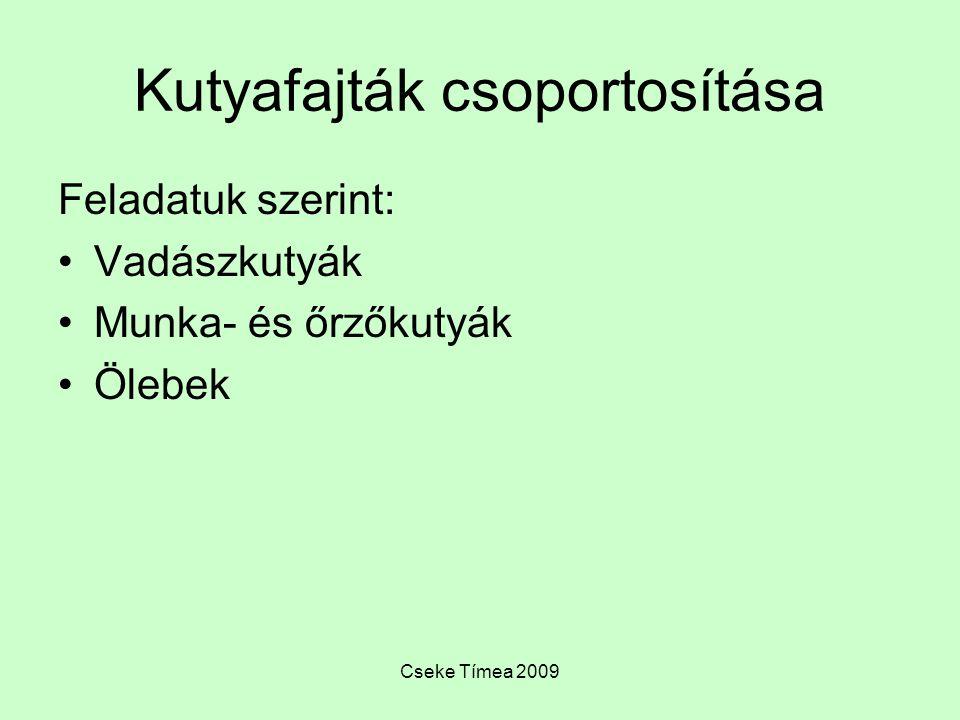 Cseke Tímea 2009 Kutyafajták csoportosítása Feladatuk szerint: Vadászkutyák Munka- és őrzőkutyák Ölebek