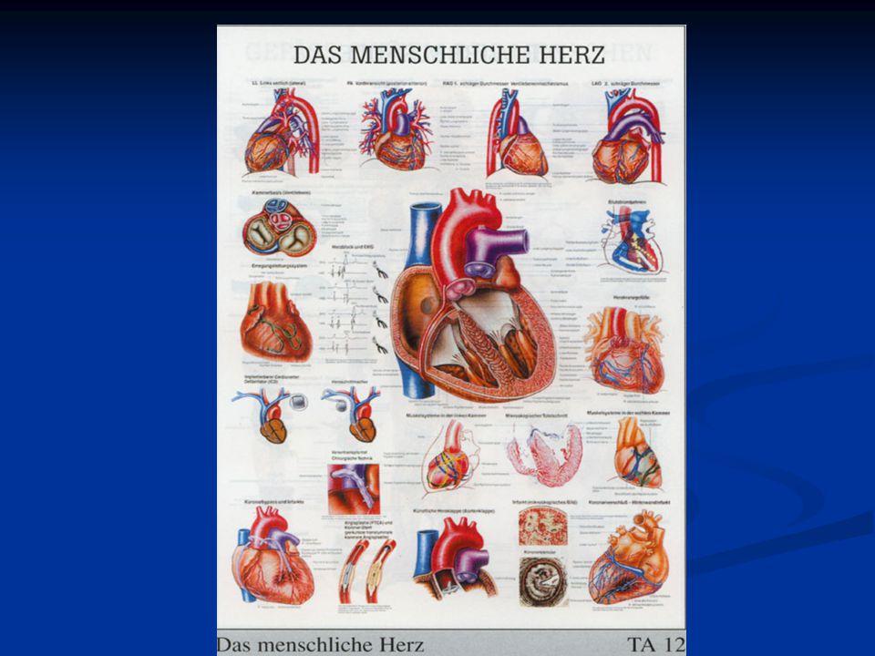 A szív felépítése izmos falú, négy üregből álló szerv bal és jobb szívfél, bal valamint jobb pitvarok és kamrák a szívben a vér áramlása egyirányú, pitvarok felől a kamrák felé majd a nagyerekbe áramlik Az egyirányú áramlást a szívbillentyűk teszik lehetővé