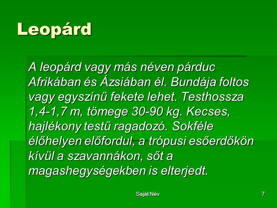 7 Leopárd A leopárd vagy más néven párduc Afrikában és Ázsiában él. Bundája foltos vagy egyszínű fekete lehet. Testhossza 1,4-1,7 m, tömege 30-90 kg.