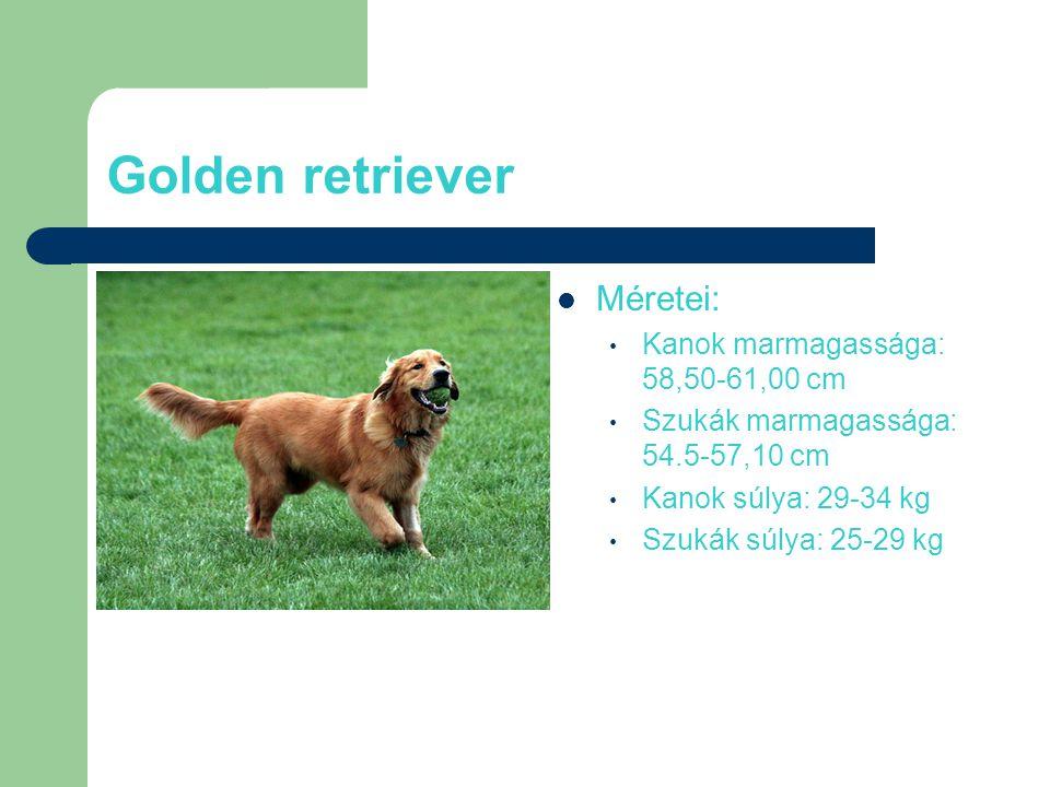 Golden retriever Méretei: Kanok marmagassága: 58,50-61,00 cm Szukák marmagassága: 54.5-57,10 cm Kanok súlya: 29-34 kg Szukák súlya: 25-29 kg