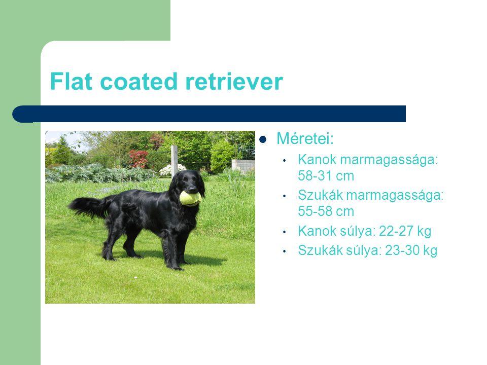 Flat coated retriever Méretei: Kanok marmagassága: 58-31 cm Szukák marmagassága: 55-58 cm Kanok súlya: 22-27 kg Szukák súlya: 23-30 kg