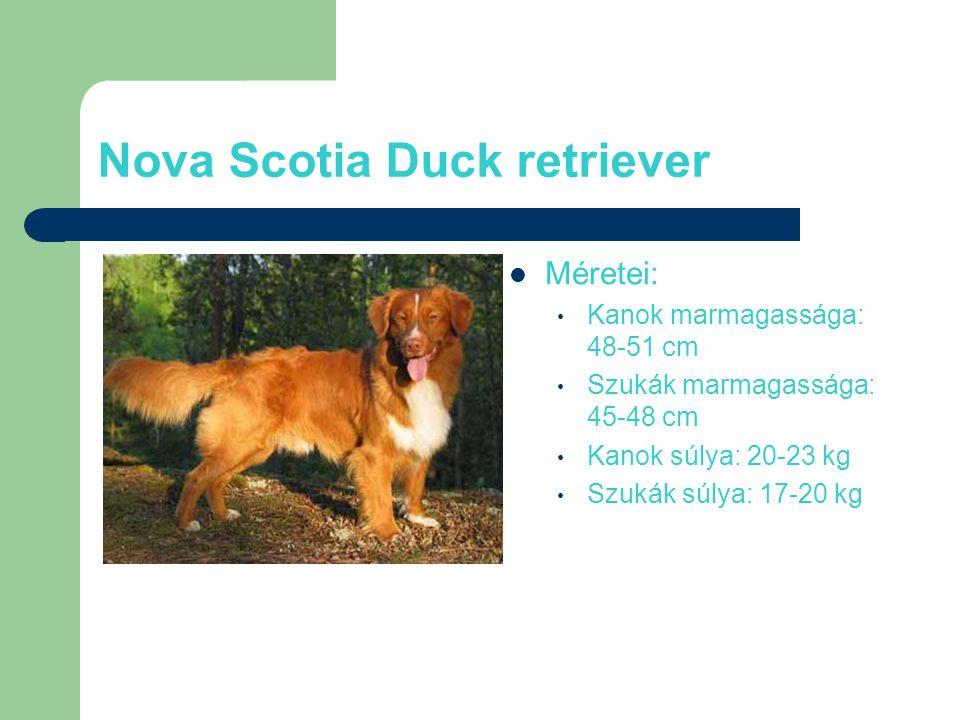 Nova Scotia Duck retriever Méretei: Kanok marmagassága: 48-51 cm Szukák marmagassága: 45-48 cm Kanok súlya: 20-23 kg Szukák súlya: 17-20 kg