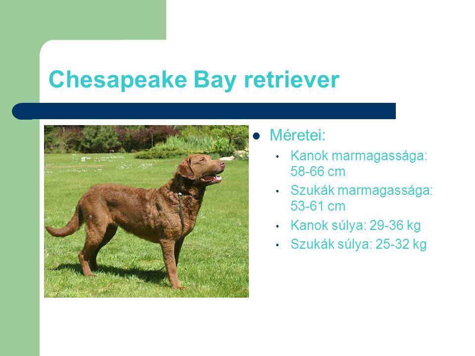 Chesapeake Bay retriever Méretei: Kanok marmagassága: 58-66 cm Szukák marmagassága: 53-61 cm Kanok súlya: 29-36 kg Szukák súlya: 25-32 kg