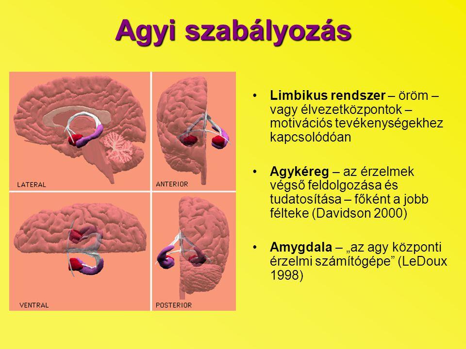 """Agyi szabályozás Limbikus rendszer – öröm – vagy élvezetközpontok – motivációs tevékenységekhez kapcsolódóan Agykéreg – az érzelmek végső feldolgozása és tudatosítása – főként a jobb félteke (Davidson 2000) Amygdala – """"az agy központi érzelmi számítógépe (LeDoux 1998)"""