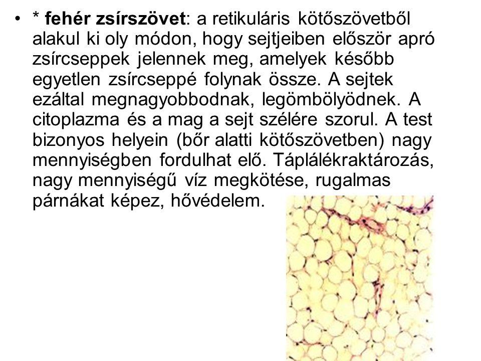 * fehér zsírszövet: a retikuláris kötőszövetből alakul ki oly módon, hogy sejtjeiben először apró zsírcseppek jelennek meg, amelyek később egyetlen zs