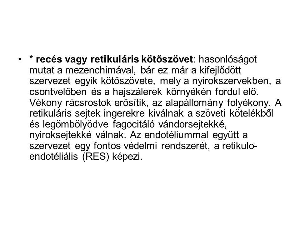 * recés vagy retikuláris kötőszövet: hasonlóságot mutat a mezenchimával, bár ez már a kifejlődött szervezet egyik kötőszövete, mely a nyirokszervekben
