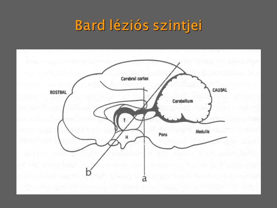 Bard léziós szintjei