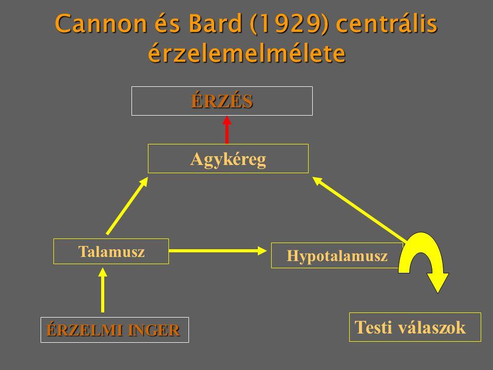 Cannon és Bard (1929) centrális érzelemelmélete ÉRZÉS Agykéreg Talamusz ÉRZELMI INGER Hypotalamusz Testi válaszok
