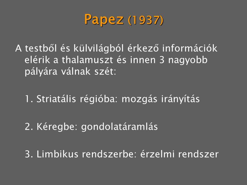 Papez (1937) A testből és külvilágból érkező információk elérik a thalamuszt és innen 3 nagyobb pályára válnak szét: 1. Striatális régióba: mozgás irá