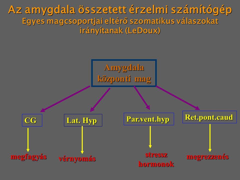 Az amygdala összetett érzelmi számítógép Egyes magcsoportjai eltérő szomatikus válaszokat irányítanak (LeDoux) Amygdala központi mag CG Lat. Hyp Par.v