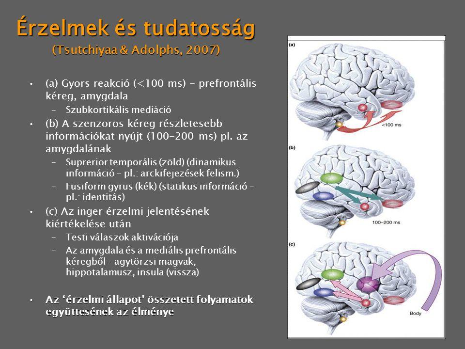 Érzelmek és tudatosság (Tsutchiyaa & Adolphs, 2007) (a) Gyors reakció (<100 ms) - prefrontális kéreg, amygdala –Szubkortikális mediáció (b) A szenzoro