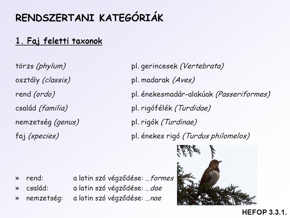 RENDSZERTANI KATEGÓRIÁK 1. Faj feletti taxonok törzs (phylum)pl. gerincesek (Vertebrata) osztály (classis)pl. madarak (Aves) rend (ordo)pl. énekesmadá
