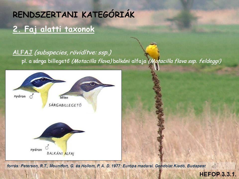 2. Faj alatti taxonok ALFAJ (subspecies, rövidítve: ssp.) pl. a sárga billegető (Motacilla flava) balkáni alfaja (Motacilla flava ssp. feldeggi) RENDS