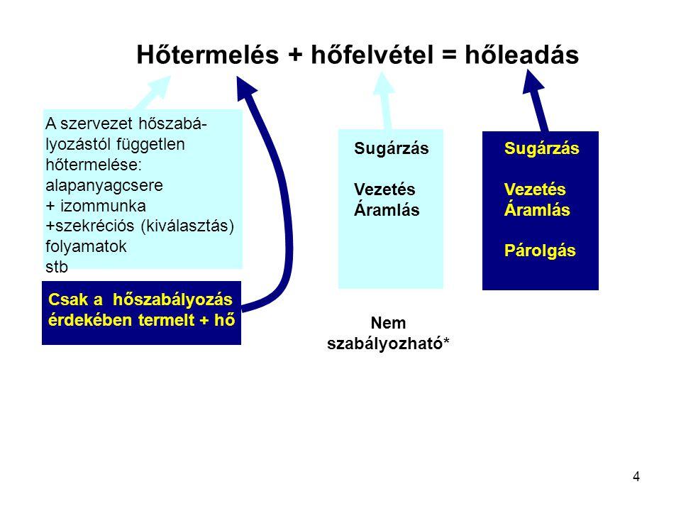 4 Hőtermelés + hőfelvétel = hőleadás A szervezet hőszabá- lyozástól független hőtermelése: alapanyagcsere + izommunka +szekréciós (kiválasztás) folyam