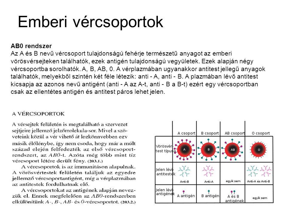 Emberi vércsoportok AB0 rendszer Az A és B nevű vércsoport tulajdonságú fehérje természetű anyagot az emberi vörösvérsejteken találhatók, ezek antigén