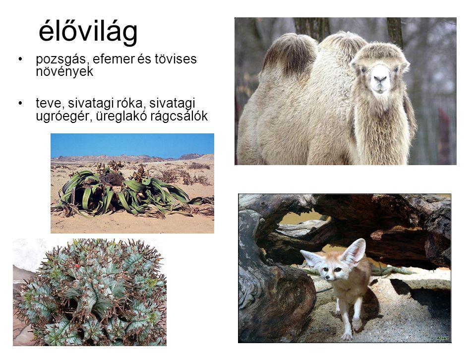 élővilág pozsgás, efemer és tövises növények teve, sivatagi róka, sivatagi ugróegér, üreglakó rágcsálók