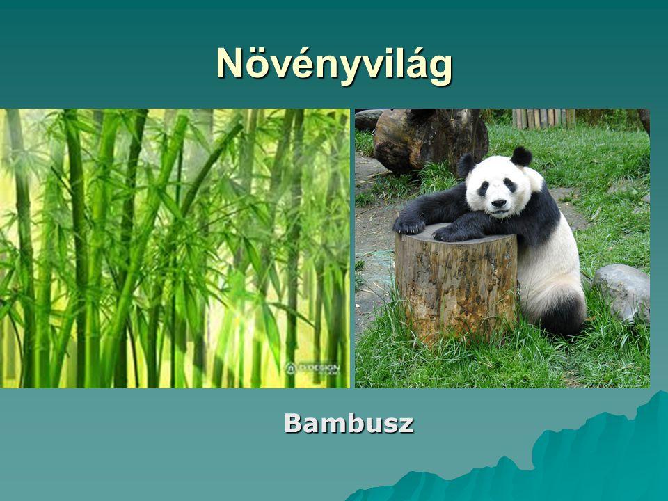 Növényvilág Bambusz