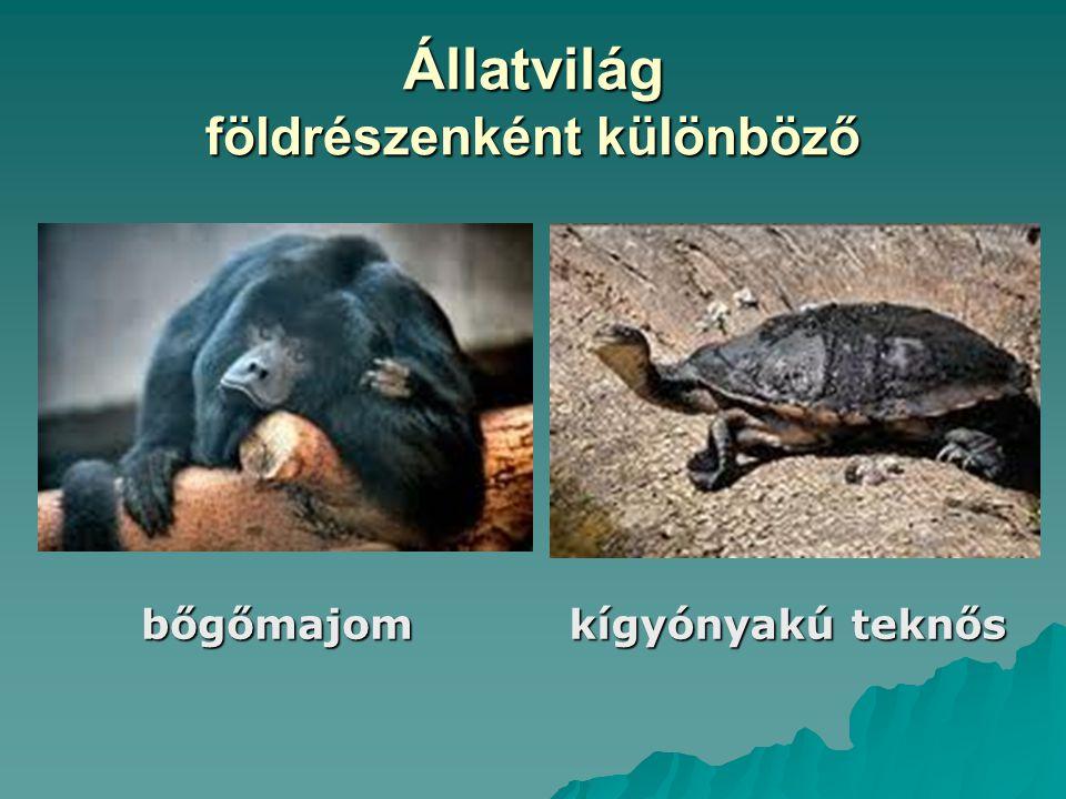 Állatvilág földrészenként különböző bőgőmajom kígyónyakú teknős