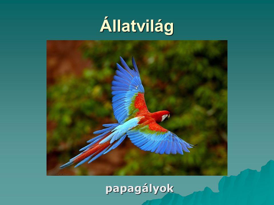 Állatvilág papagályok