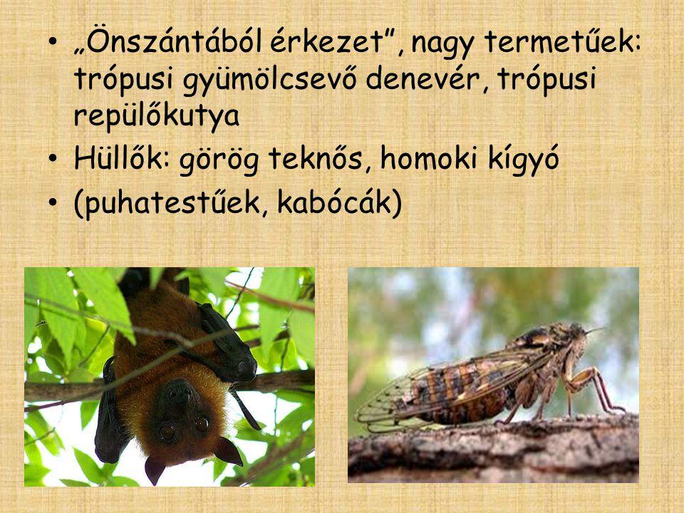 """""""Önszántából érkezet , nagy termetűek: trópusi gyümölcsevő denevér, trópusi repülőkutya Hüllők: görög teknős, homoki kígyó (puhatestűek, kabócák)"""