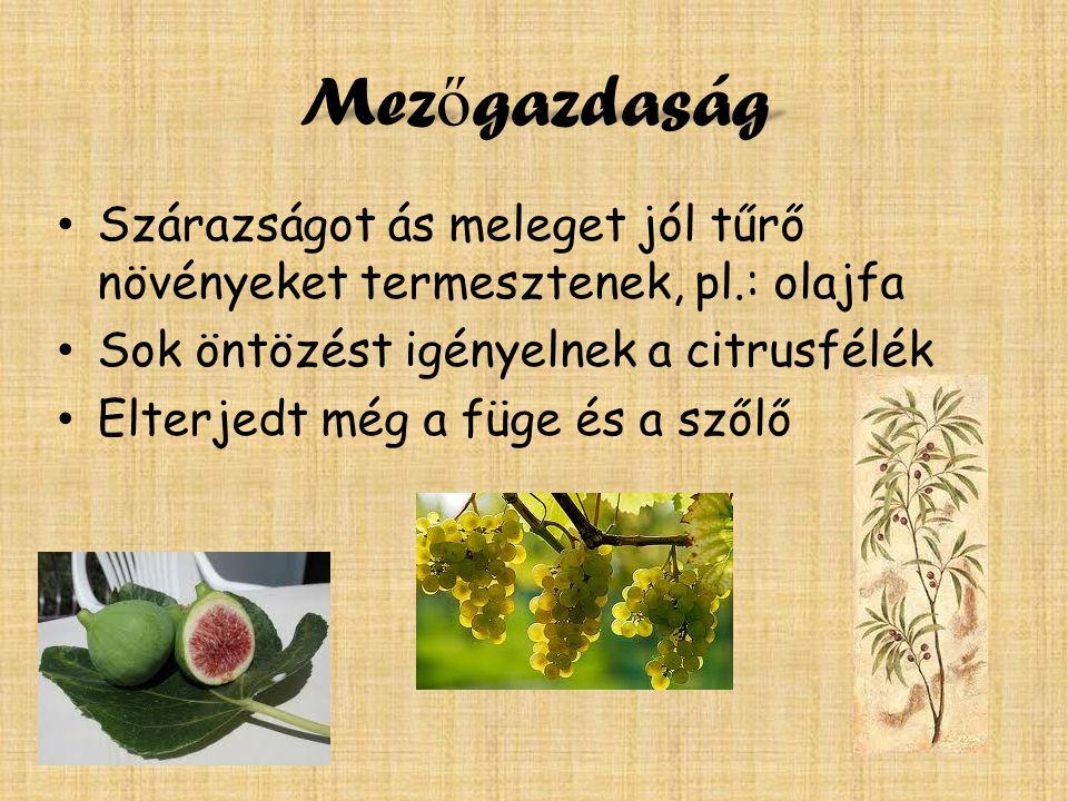 Mez ő gazdaság Szárazságot ás meleget jól tűrő növényeket termesztenek, pl.: olajfa Sok öntözést igényelnek a citrusfélék Elterjedt még a füge és a szőlő