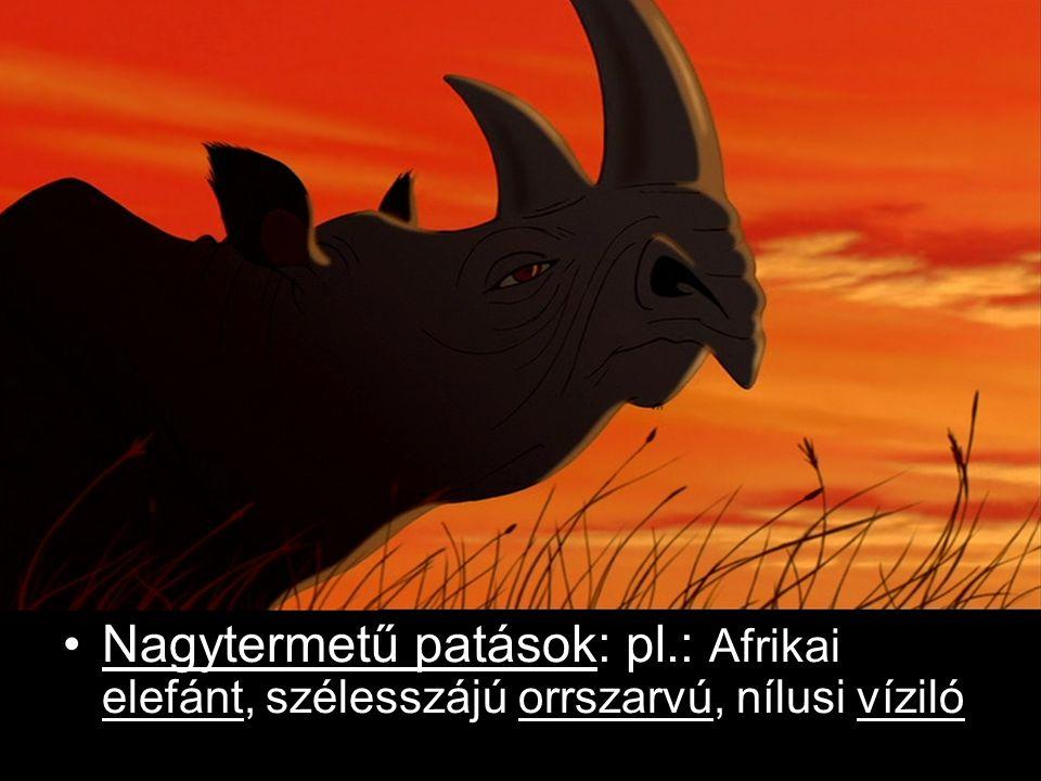 Más patások: pl.: Jávorantilop, kafferbivaly, Thomson-gazella, zsiráf, varacskosdisznó, grevy-zebra