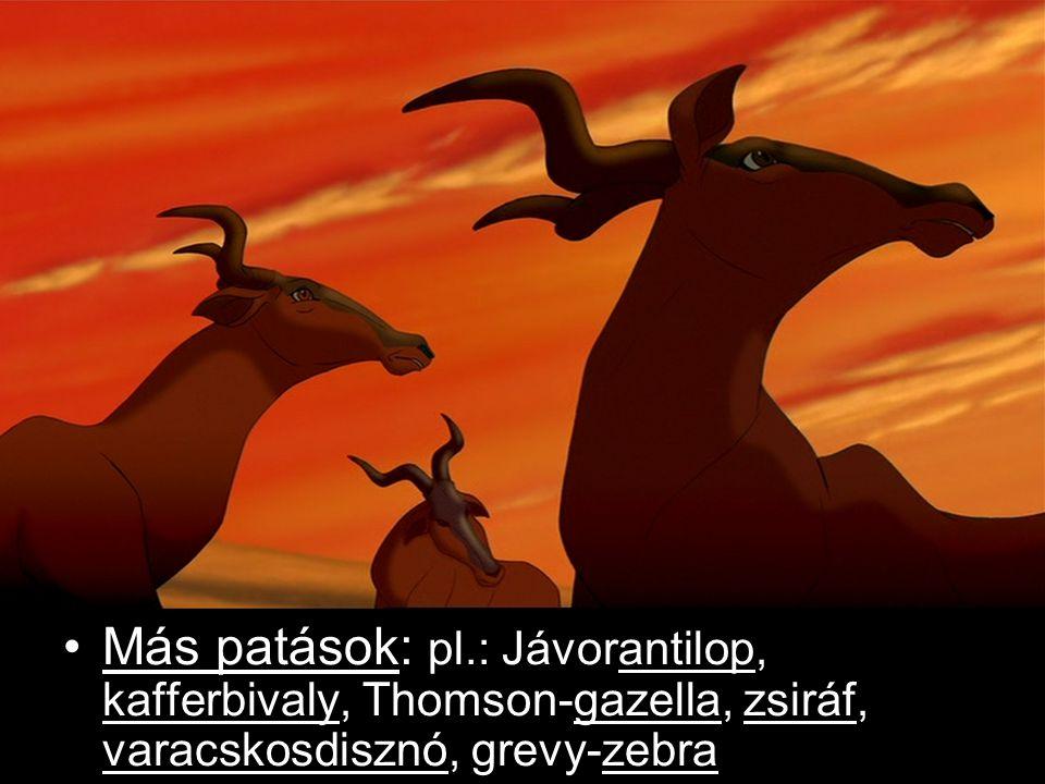 Egyéb állatfajok: Hüllők: pl.: Níusi krokodil Madarak: pl.: Rózsás flamingó, marabu, szarvascsőrű madár Kutyafélék: Foltos hiéna, hiénakutya Cibetmacskafélék: Rókamanguszta, sárga mongúz