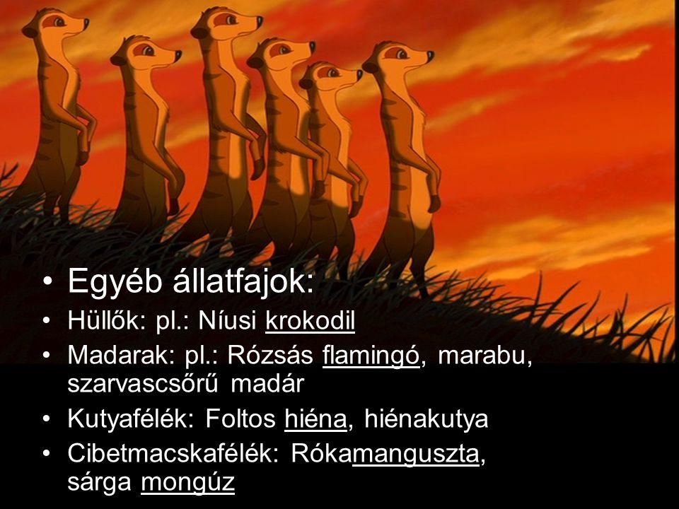Egyéb állatfajok: Hüllők: pl.: Níusi krokodil Madarak: pl.: Rózsás flamingó, marabu, szarvascsőrű madár Kutyafélék: Foltos hiéna, hiénakutya Cibetmacs