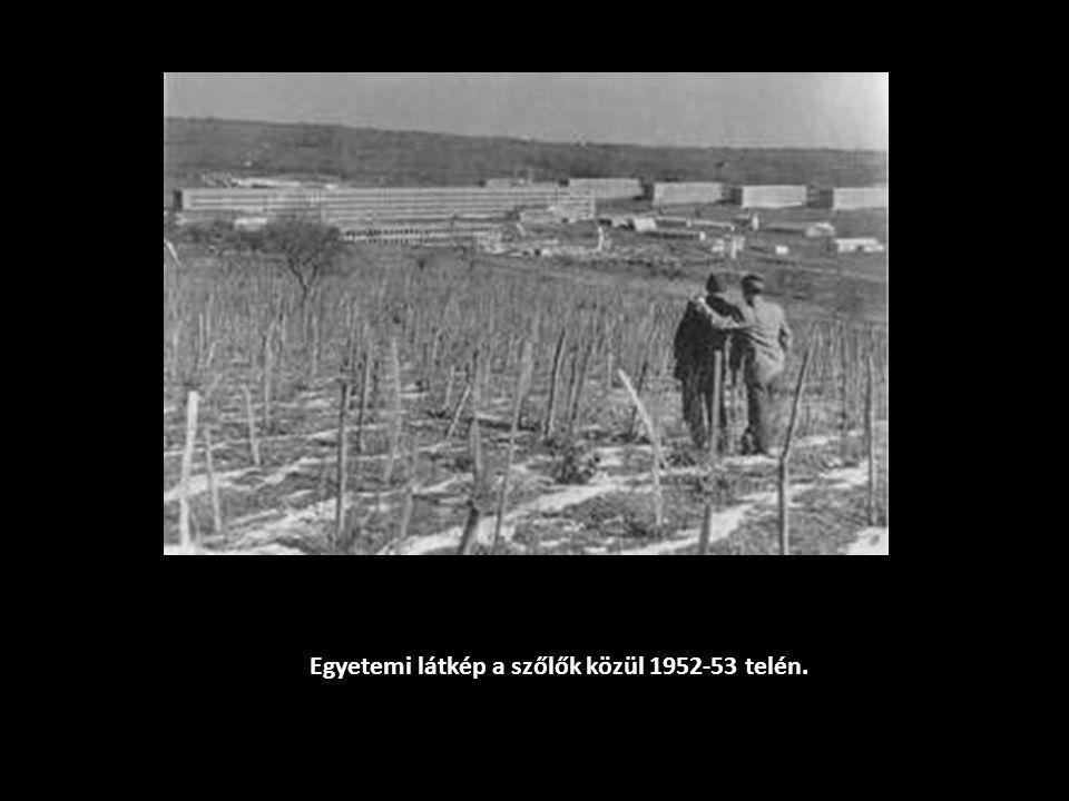 Egyetemi látkép a szőlők közül 1952-53 telén.